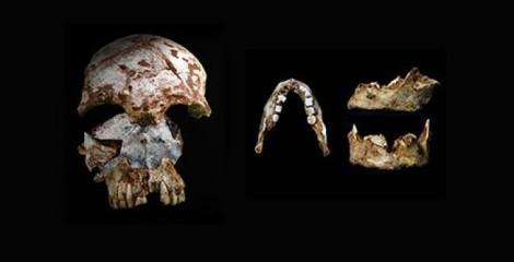 Araştırmacılar Laos'ta aynı mağara içinde modern insan özellikleri taşıyan eski bir kafatası (solda) ve modern özelliklerle ilkel özellikleri birlikte barındıran bir çene kemiği buldu. Buluntuların 46000 ile 63000 yıl öncesine ait olduğu düşünülüyor.