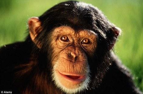Araştırma 13 milyon yıl önce maymunlardan ayrılan insan atalarının günümüze kadarki evriminde genomlarından yaklaşık 40.7 milyon baz çifti kaybettiklerini öne sürüyor.