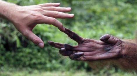 Çalışma, insan ellerinin şempanze ellerinden bazı kriterler açısından ilkel olduğunu gösteriyor.