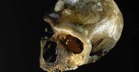 storymaker-humans-vs-neanderthals5-514x268