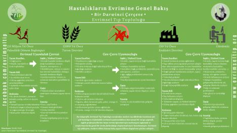 hastalik-infografik