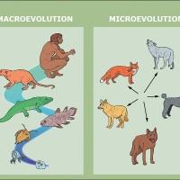 Temel Makaleler 02: Evrimsel Tıbbın İnsana Bakış Açısı