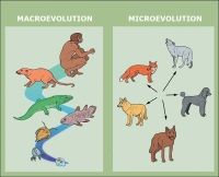 Mikroevrim kabaca tür içindeki evrimsel değişiklere vurgu yaparken makroevrimde bir türün evriminden bahsetmekteyiz.