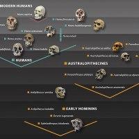Temel Makaleler 04: İnsan Evriminin Kısa Bir Özeti
