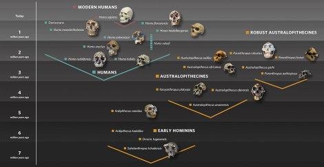 İnsan Evrimi Çizelge