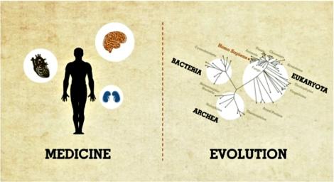 medicine-evolution