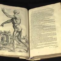 Anatomik Terminoloji • Ansiklopedik Bilgi