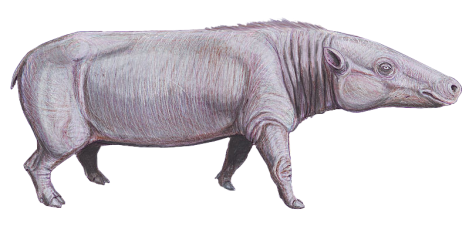 Anthracotherium.png